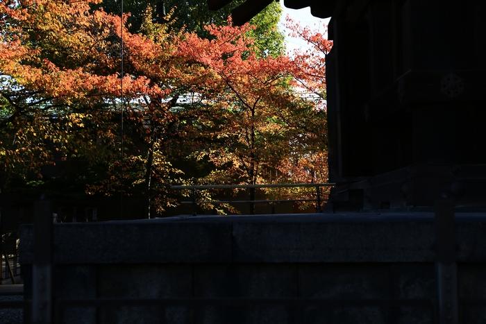 toji1411_09.jpg