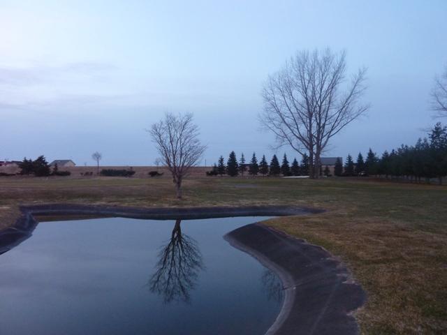 030一本の木の水鏡