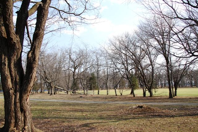 022鈴蘭公園の折れた木