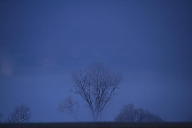 012けあらしに佇む木