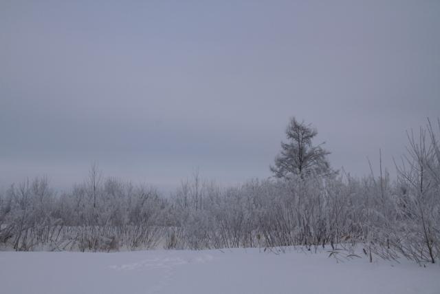 194霧氷と一本の木