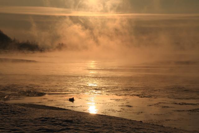 196光る川の中の鴨