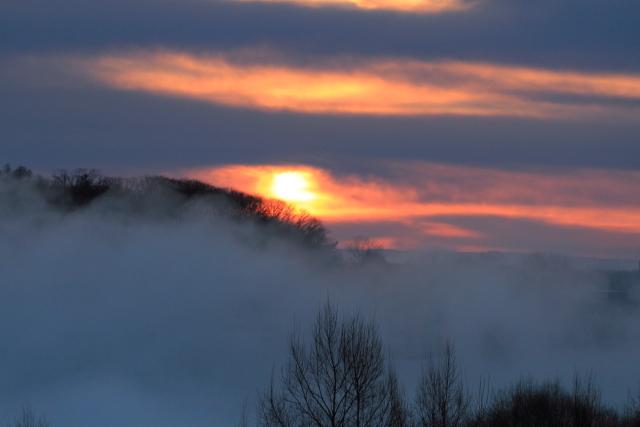 193朝陽に染まる枝先