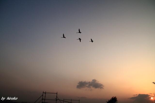 055夕景と白鳥