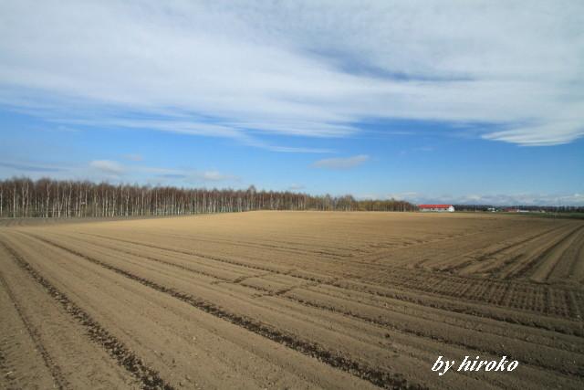 113肥沃な畑