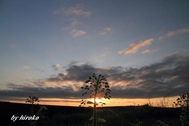 067朝陽のシャワーJPG