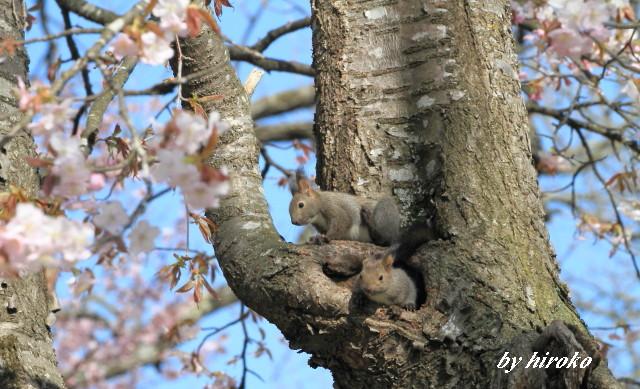 440桜の中のチビッこ
