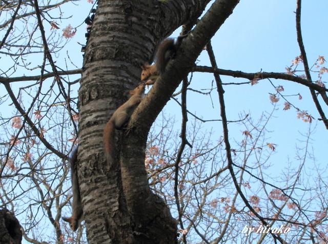 148桜の中で仲良しさん