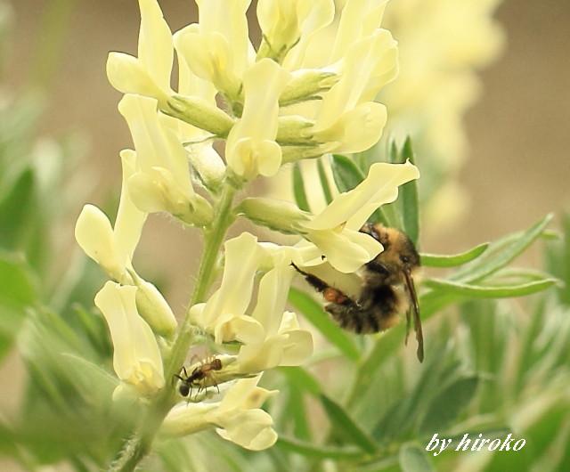 029花の蜜を求めてJPG