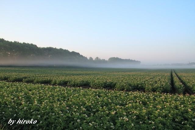 038地霧とジャガイモの花