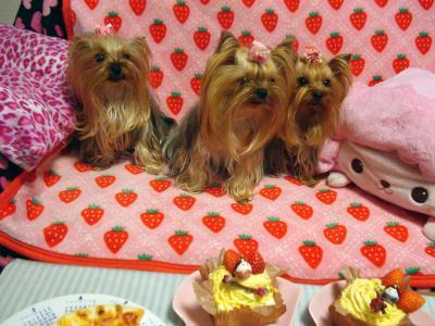 ケーキと3人娘