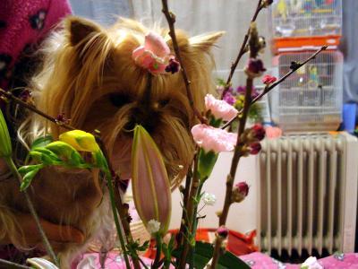 花は食べないでね