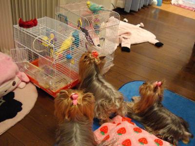 キコとピヨキと3人娘