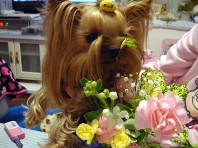 お花も食べられますか?