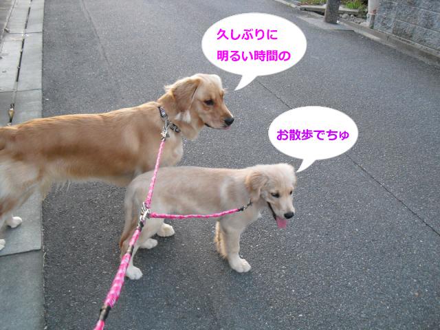 001_convert_20100901080247.jpg