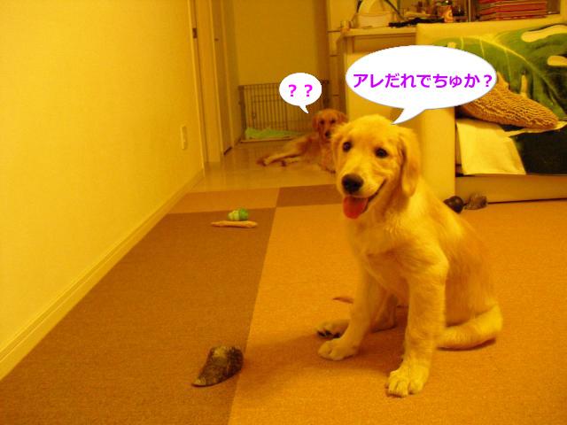 002_convert_20100907080802.jpg