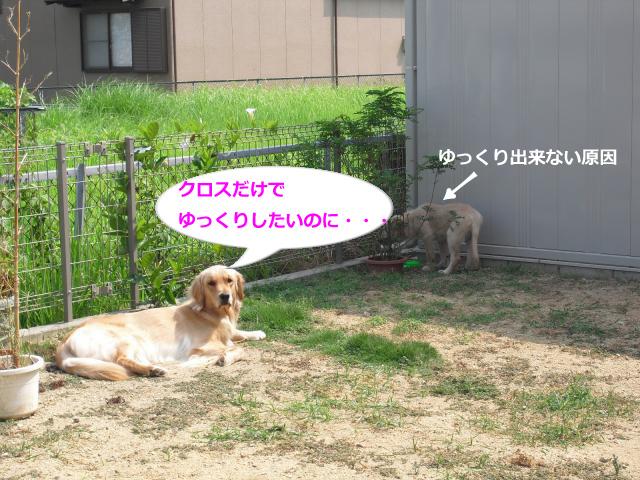 003_convert_20100826083337.jpg