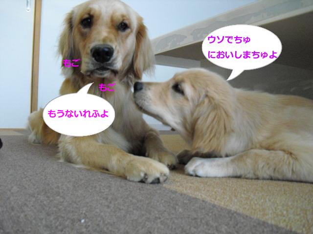 003_convert_20100903084730.jpg