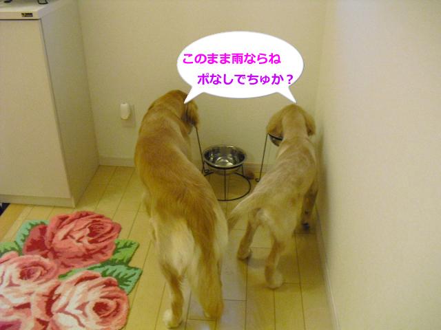 003_convert_20100909081445.jpg
