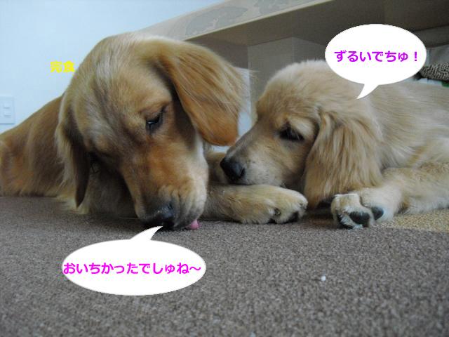 004_convert_20100903084613.jpg