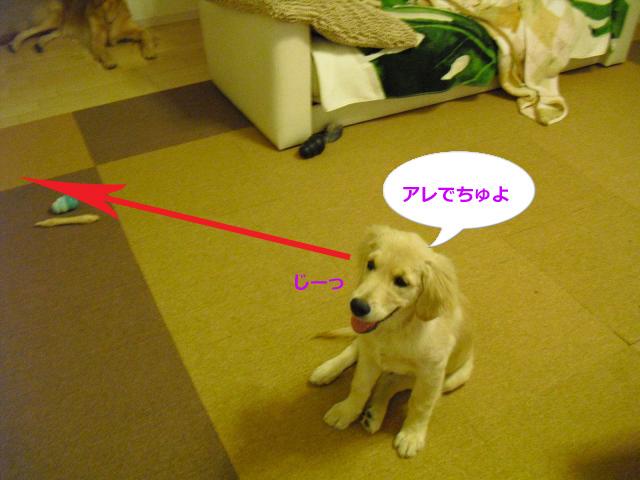 004_convert_20100907080853.jpg