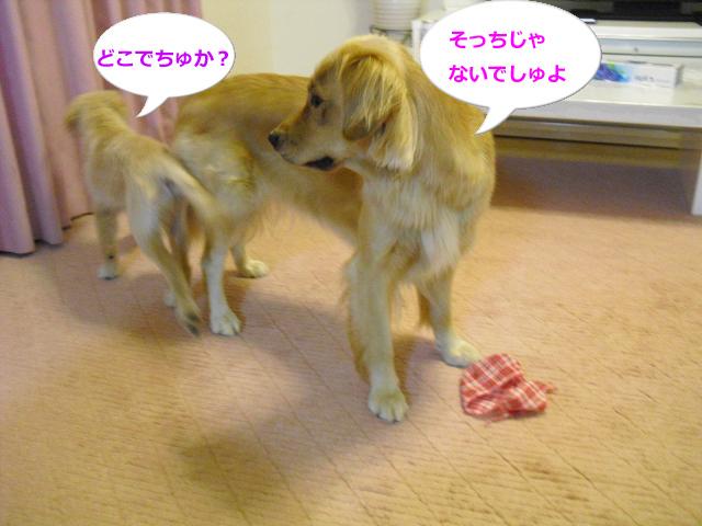 005_convert_20100825080846.jpg