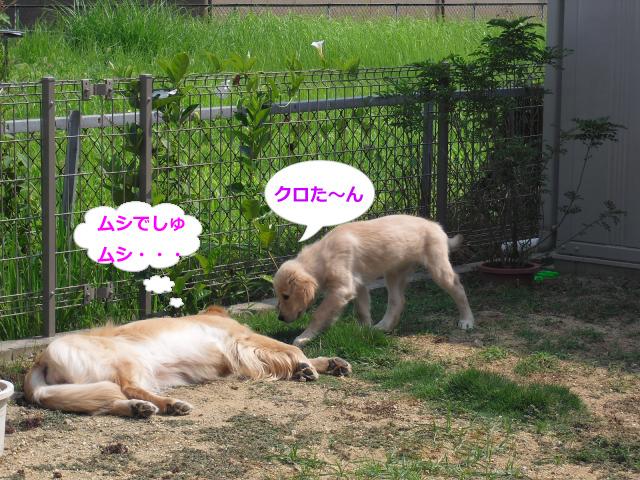 005_convert_20100826083502.jpg