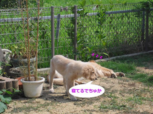 006_convert_20100826083534.jpg