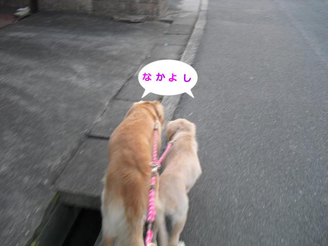006_convert_20100901080410.jpg