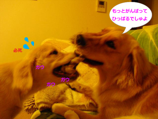 006_convert_20100904081507.jpg