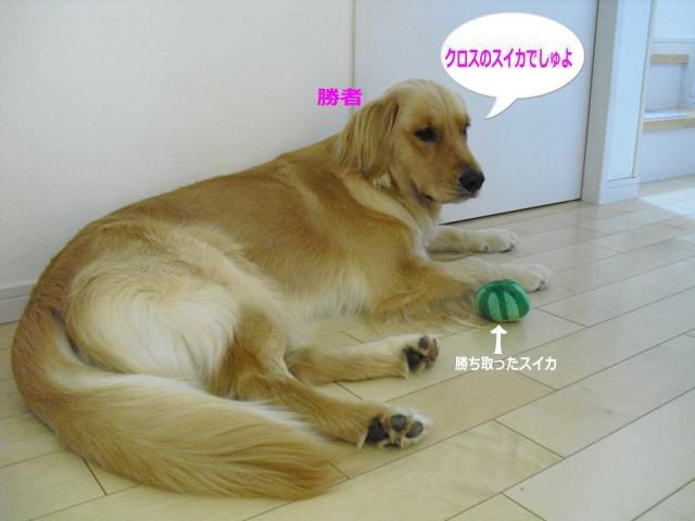 008-81_convert_20100722115014.jpg