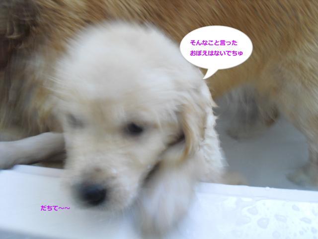 008-83_convert_20100724093138.jpg
