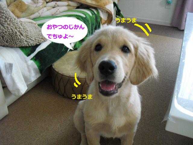 008_convert_20100903084914.jpg