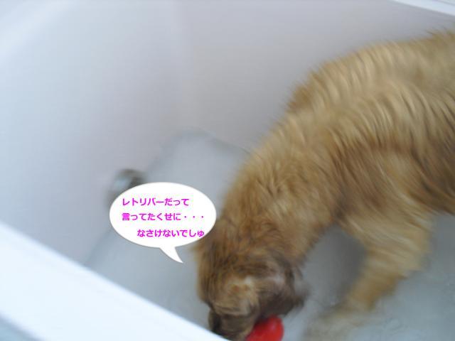 010-83_convert_20100724093207.jpg