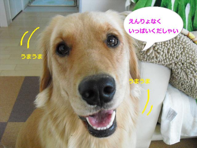 010_convert_20100903084940.jpg