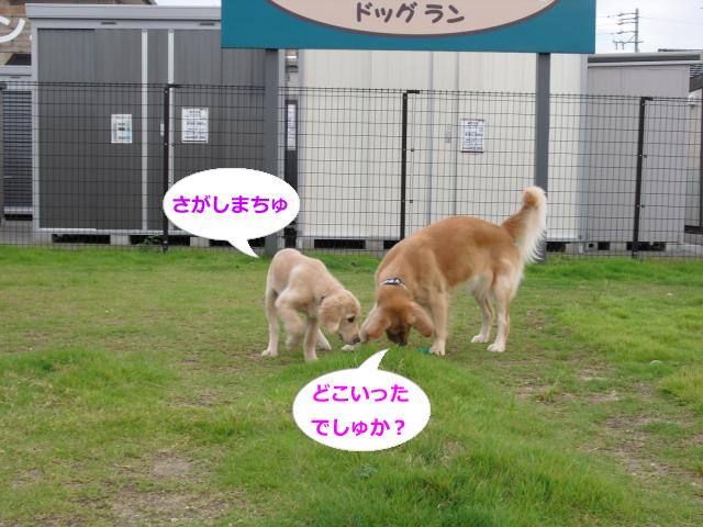 010_convert_20100906064053.jpg