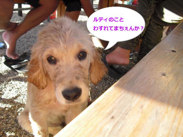 014_convert_20100830082755.jpg