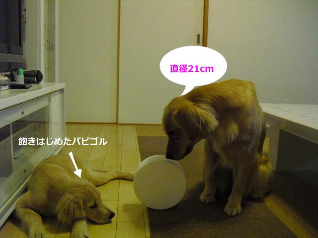 014_convert_20100912085830.jpg