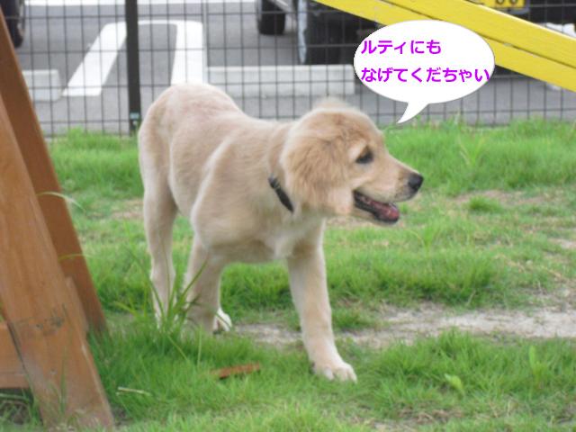015_convert_20100906064131.jpg