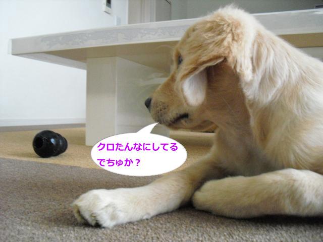 019_convert_20100909081706.jpg