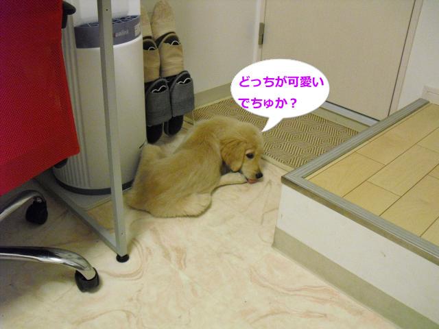 019_convert_20100911074910.jpg