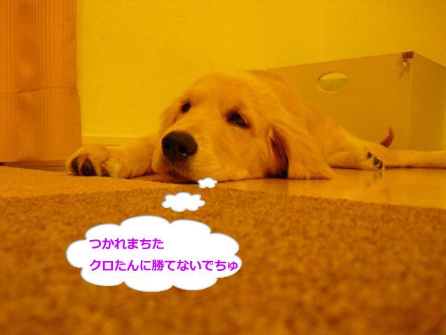 023_convert_20100904081633.jpg