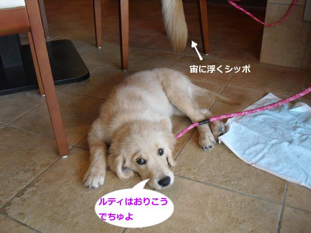 028_convert_20100824082452-102.jpg