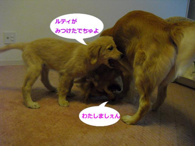 038_convert_20100825080601.jpg