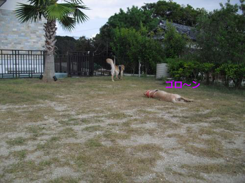 CIMG3431_convert_20100914080840.jpg