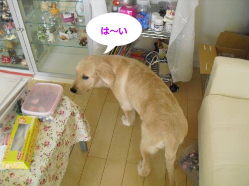 CIMG3519_convert_20100916085636.jpg