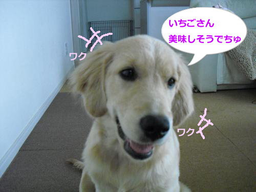 CIMG3627_convert_20100921074844.jpg