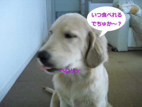 CIMG3628_convert_20100921074910.jpg