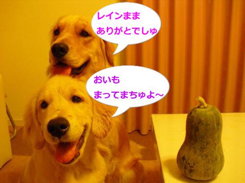 CIMG3637_convert_20100923082409.jpg