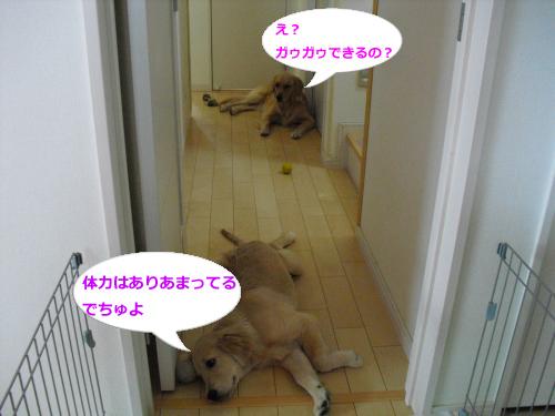 CIMG3645_convert_20100923084736.jpg